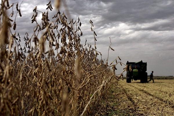 Precios de la soja bajaron en mercados internacionales.