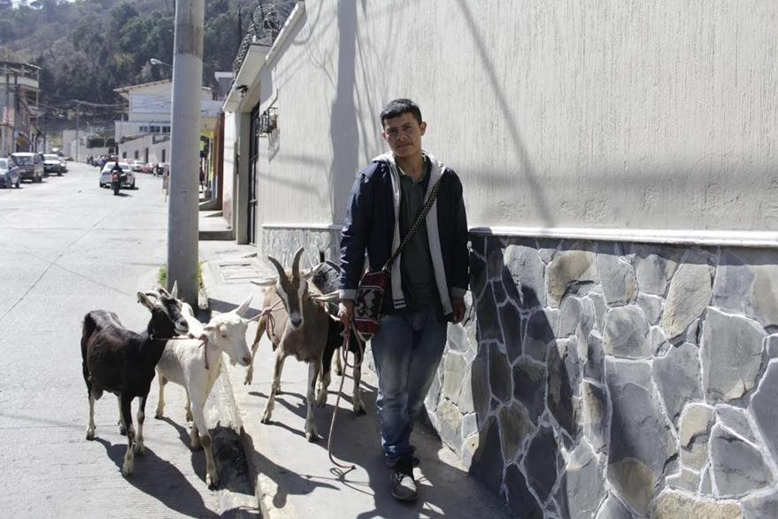 Vendedor de leche de cabra recupera animales robados en Xela. (Foto Prensa Libre: María José Longo)