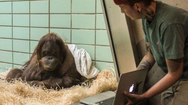 Sinta, del zoológico Wilhelma en Stuttgard y Gempa se dieron cita en Bélgica. (FOTO: WILHELMA STUTTGART / HARALD KNITTER)
