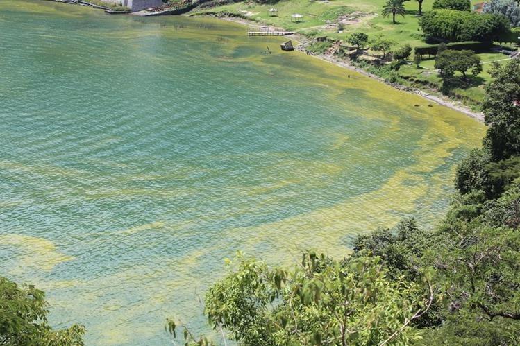 Lago de Atitlán, en Sololá, luce verde en algunas partes debido al incremento de la cianobacteria. (Foto Prensa Libre: Ángel Julajuj)