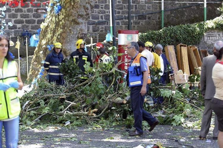 Once personas murieron al ser aplastadas por un árbol que les cayó encima, en la isla de Madeira.Portugal.(EFE).