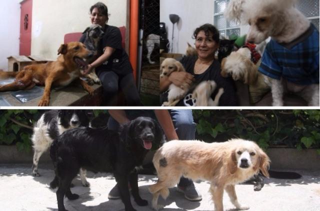 Estos caninos han sido rescatados de las calles (Foto Prensa Libre: Ana Lucía Ola)