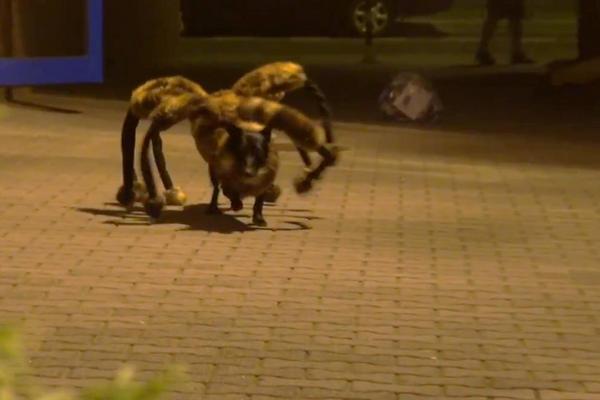 """<p>""""China"""" es el perro araña que aparece en el video de Sylwester Wardega. (Foto Prensa Libre: YouTube)<br></p>"""
