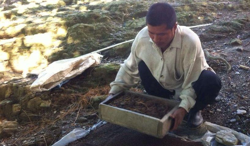 Plantación de hortalizas como alternativa a las siembras tradicionales y venta de abono orgánico son parte de los proyectos impulsados. (Foto: Fundación Cofiño Stahl).