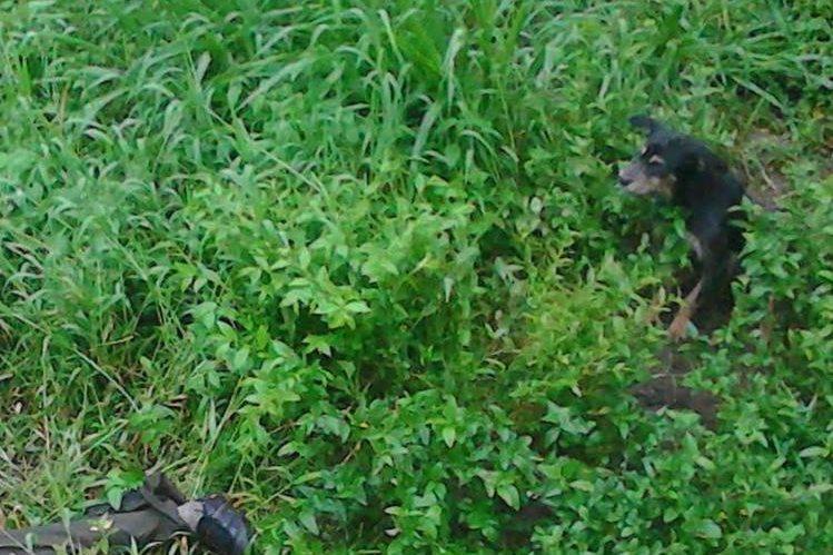 Un perro de nombre Viejito permanece junto al cadáver de su amo, en Cuilapa, Santa Rosa. (Foto Prensa Libre: Oswaldo Cardona)