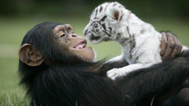 El hombre debe demostrar respeto y compasión por toda forma de vida animal.