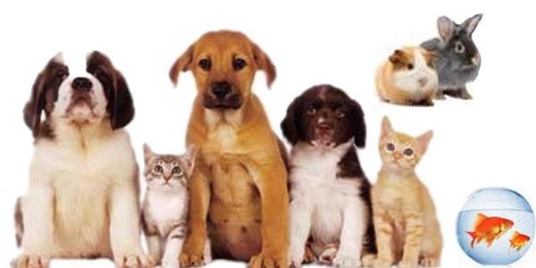 Los animales son seres que sienten por lo que deben ser respetados y jamás hacerlos sufrir.