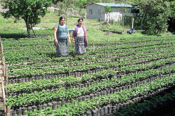 Presentan avances de la iniciativa durante conferencia de la FAO. (Foto Prensa Libre: Hemeroteca)