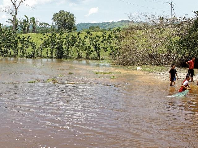 El arroyo El Pantanal  causó daños en plantaciones de maíz,  en Melchor de Mencos.