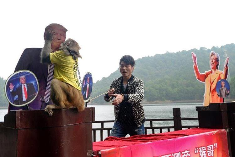 """""""Geda"""", el mono adivino planta un beso a la fotografía del republicano Donald Trump. (Foto Prensa Libre: AFP)."""