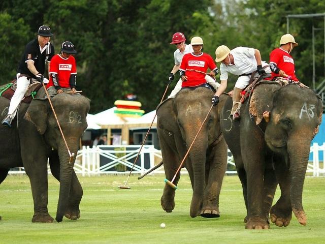 Elefantes se convierten en estrellas de polo en Tailandia. (Foto Prensa LIbre: EFE)
