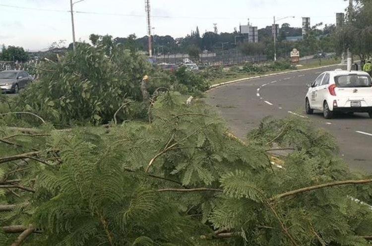 El pasado 16 de agosto nueve hombres talaron 52 jacarandas en bulevar Juan Pablo II. (Foto: Hemeroteca PL)