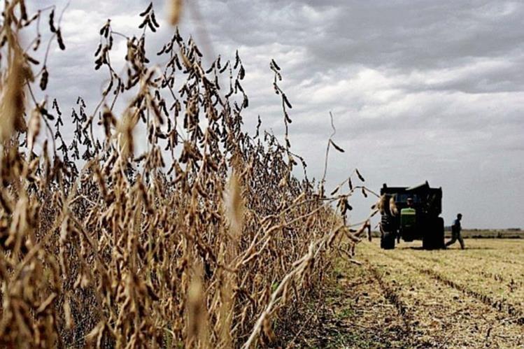 Investigadores colombianos desarrollaron un biofertilizante para soja.