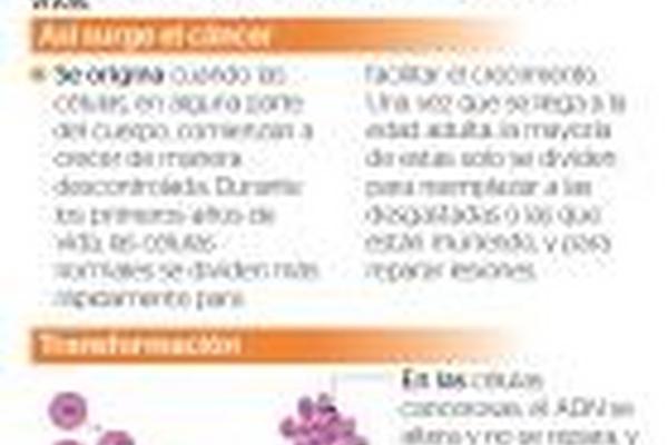 El cáncer se origina cuando las células crecen sin control en el organimo