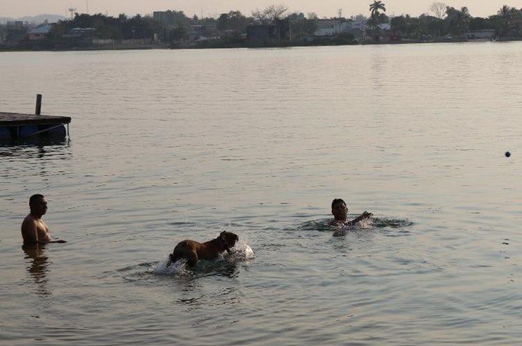 Pobladores y mascotas buscan refrescarse en el lago Petén Itzá, debido a que la temperatura llegó a 38 grados centígrados. (Foto Prensa Libre: Rigoberto Escobar)