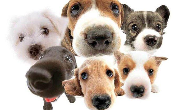 Para interpretar lo que quiere transmitirnos el perro, es necesario determinar su postura, gestos y vocalizaciones.