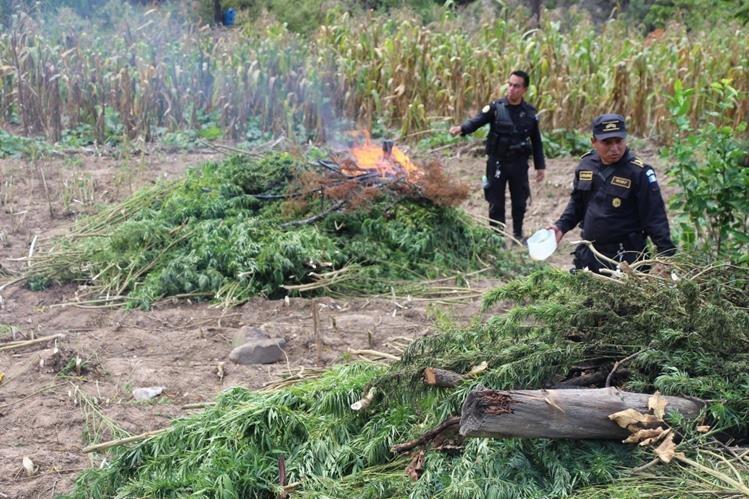 Dos agentes de la PNC queman parte de las matas de marihuana que fue erradicada en Momostenango, Totonicapán. (Foto Prensa Libre: Édgar Domínguez)