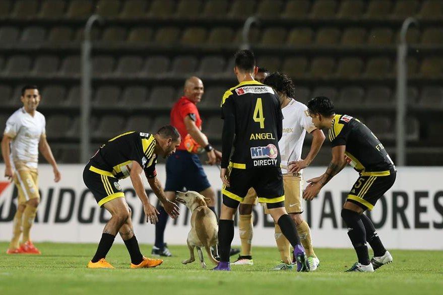 Jugadores del Táchira y de Pumas intentan tomar el perro que invadió el terreno de juego. (Foto Prensa Libre: AP)