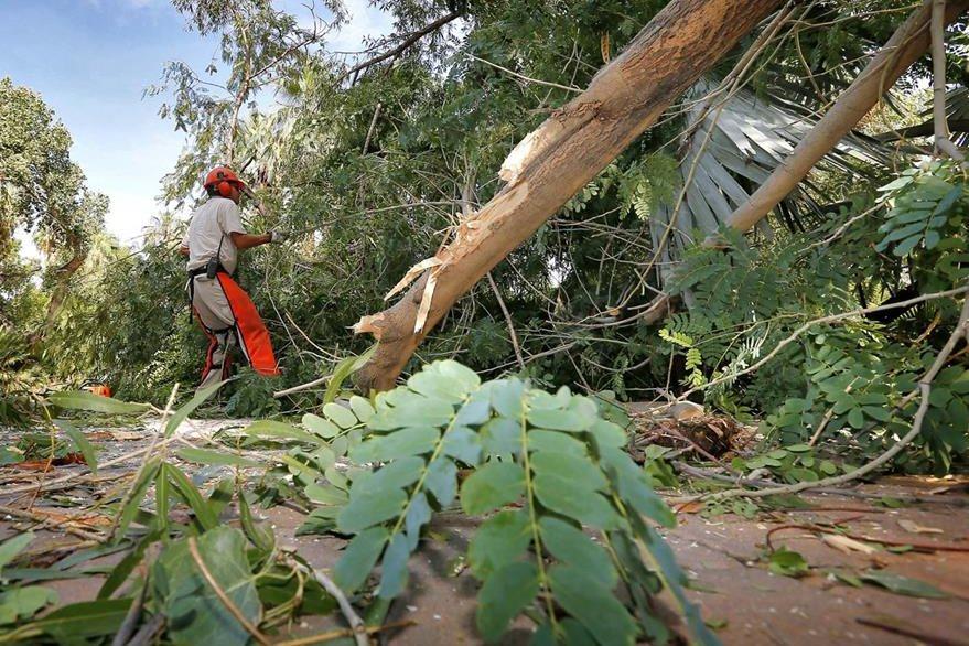 casi 15 mil millones de árboles son cortados cada año por el hombre. (Foto Prensa Libre: AP).
