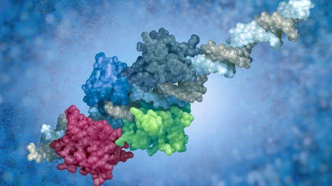El estudio revela como pequeños ajustes en la forma y composición de las proteínas han ayudado a los humanos y otros mamíferos a responder a los virus. (THINKSTOCK).