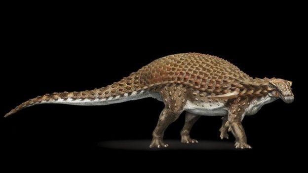 El nodosaurus era un herbívoro que alcanzaba 5,5 metros de longitud y un peso de 1,3 toneladas. DAVIDE BONADONNA / NATIONAL GEOGRAPHIC