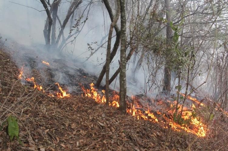 Al menos 250 hectáreas de bosque se han quemado desde noviembre del 2016 en Sololá. (Foto Prensa Libre: Ángel Julajuj)
