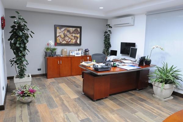 Las plantas dentro de una oficina brindan vitalidad. (Foto Prensa Libre: ÁXEL VICENTE)