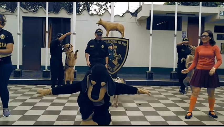 Policías peruanos bailan el famoso Scooby Doo Pa Pa acompañados de los agentes caninos. (Foto prensa Libre: Policía Nacional de Perú).