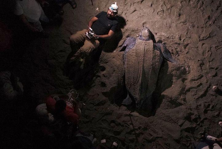 """Su primer documental es """"Cacú: Un cambio por la vida"""", acerca de la preservación de la tortuga marina. (Foto cortesía de Marvin del Cid)."""