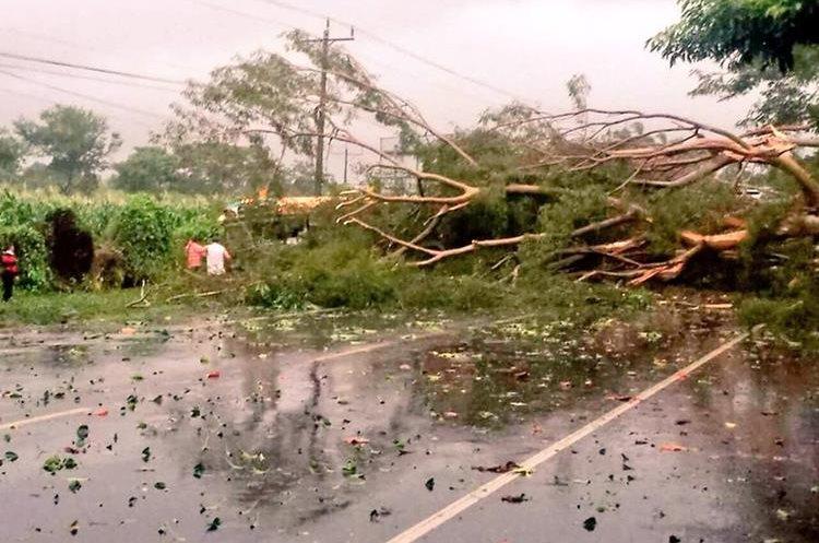 Las lluvias y vientos causados por Selma en El Salvador, han derribado árboles y provocado la crecida de ríos. (Foto Prensa Libre: Protección Civil El Salvador)