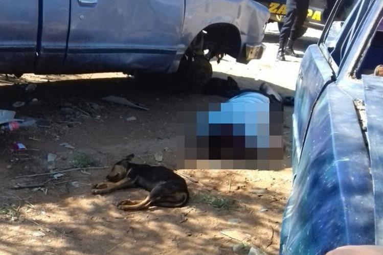 El perro permanece junto al cadáver de su dueño, quien fue atacado a balazos en La Nopalera. (Foto Prensa Libre: Mario Morales)