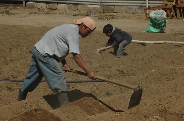 Del buen trabajo depende la calidad de las cosechas, principalmente de granos básicos. (Foto Prensa Libre: César Pérez)