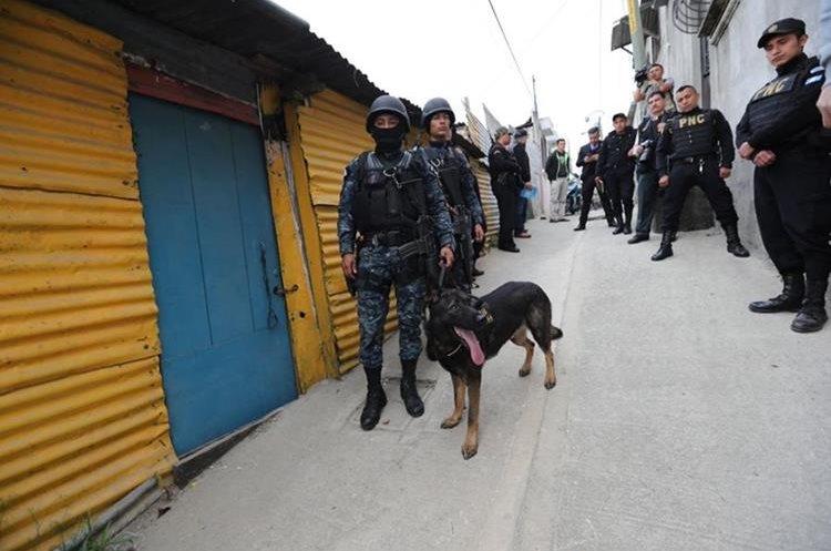 Agente canino K-9 forma parte del equipo de Mingob que apoya en allanamientos. (Foto Prensa Libre: Erick Ávila)