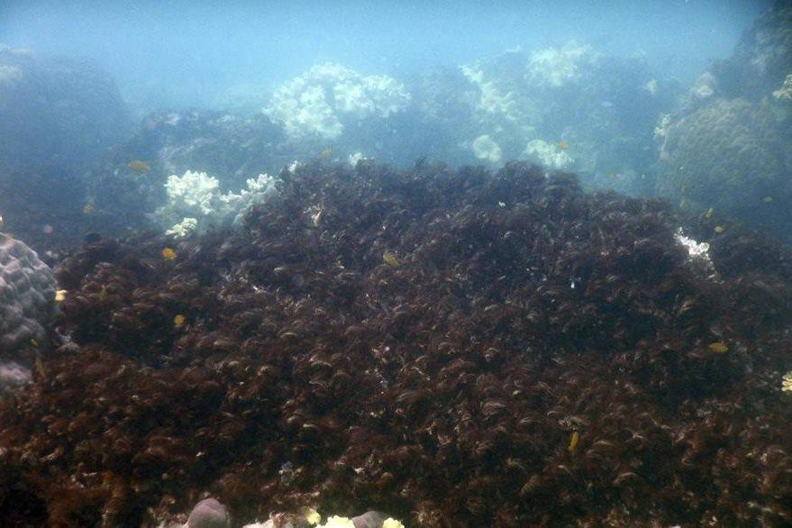 El mayor arrecife de coral del mundo sufrió fuertemente del calentamiento del agua en marzo. (Foto Prensa Libre: AP).