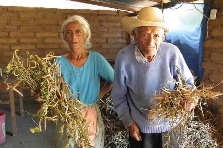 Campesinos de Sanarate, El Progreso, muestran daños en cultivos a causa de la sequía que les afecta. (Foto Prensa Libre: Héctor Contreras)
