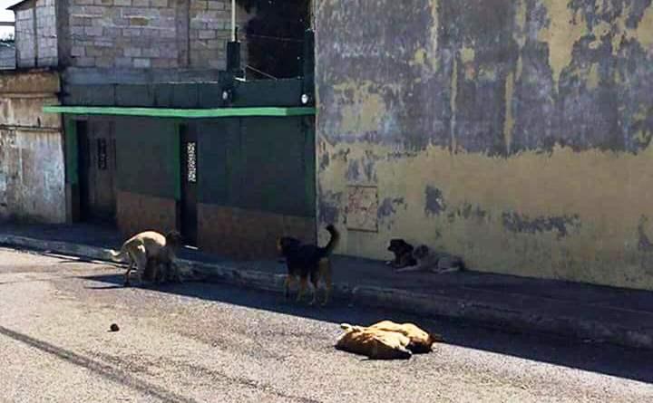 Diez perros fueron encontrados muertos en la colonia Santa Marta zona 5 de Mixco. (Foto Prensa Libre: Facebook)