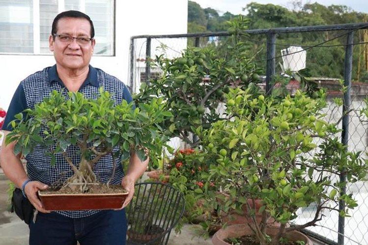 Carlos Augusto Galindo sostiene un bonsái Laurel de la India. El árbol tiene unos 20 años de ser parte de su jardín. (Foto Prensa Libre: Cristian Soto).