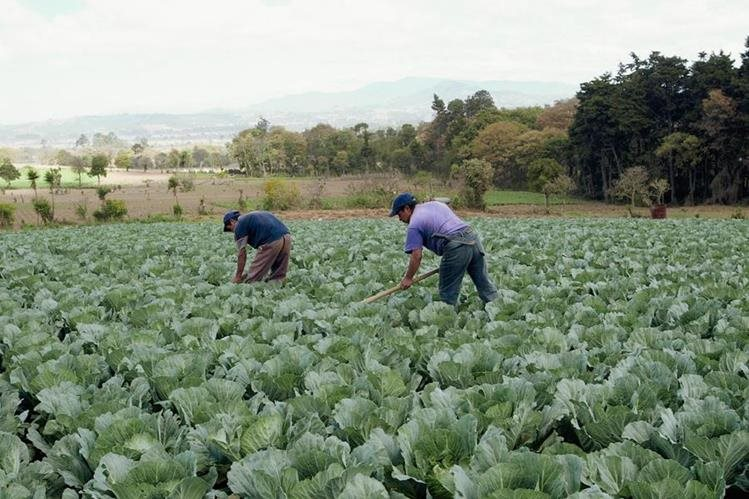 Países latinoamericanos buscan mejorar su agricultura.