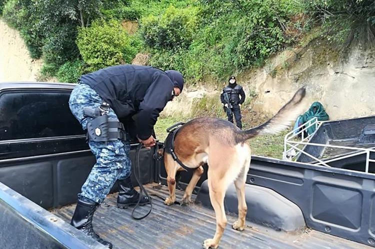 El agente canino olfateó que en la palangana del picop estaba oculta la droga. (Foto Prensa Libre: PNC)