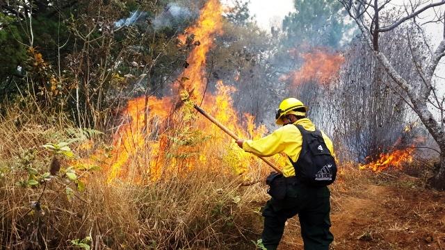Los incendios  forestales dañan el medioambiente, pues cada  año  se queman unas cien mil  hectáreas de bosque. (Foto Prensa Libre: Óscar Figueroa)