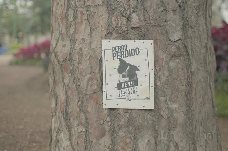 La iniciativa consiste en colocar pósters con el olor de los dueños.