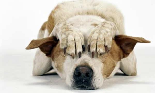 pirotecnia afecta animales
