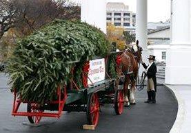 El enorme árbol de Navidad llega a la Casa Blanca de EE. UU. (Foto Prensa Libre: AP).