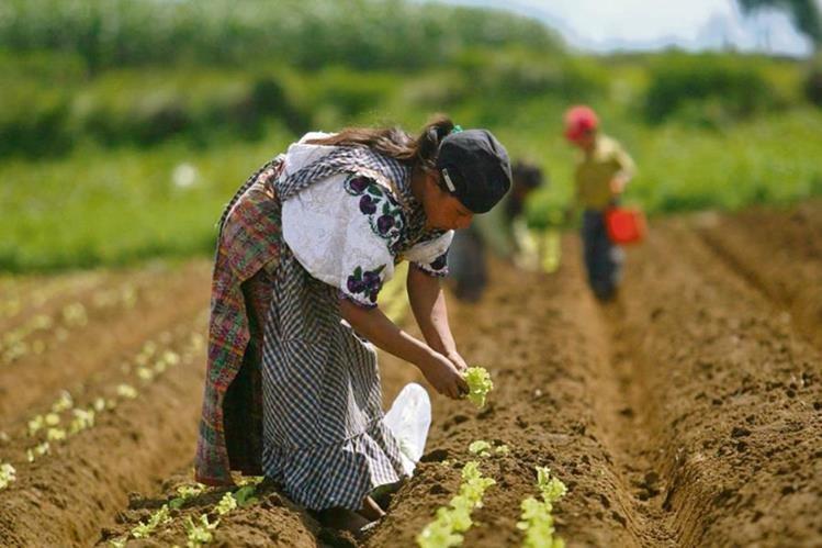 Pequeños agricultores necesitan apoyo gubernamental para fomentar el desarrollo de cultivos de consumo propio o local.
