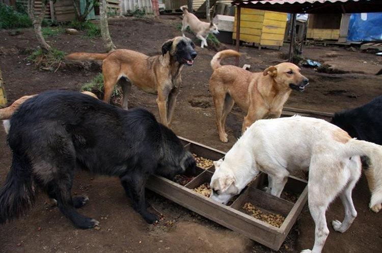 Los perros rescatados requieren de ciertos cuidados en los primeros días en su nuevo hogar (Foto: Hemeroteca PL).