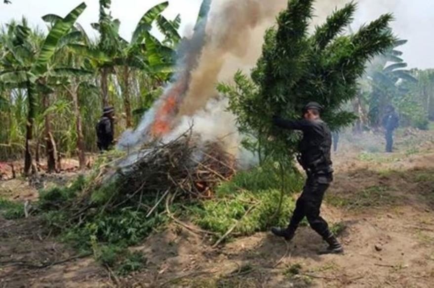 Agentes policiales destruyen en mayo último una plantación en Santa Lucía La Reforma. (Foto Prensa Libre: Hemeroteca PL).