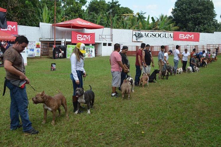 Participantes muestran a sus perros para que sean calificados por el jurado. (Foto Prensa Libre: Jorge Tizol)