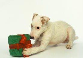 <p>Ocho regalos de Navidad para el perro</p>