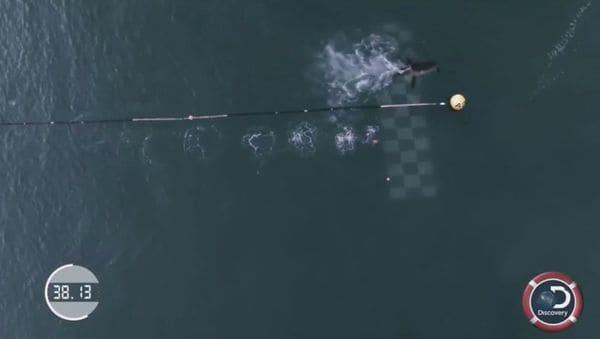 Michael Phelps enfrentó en un duelo virtual a un tiburón. (Foto Prensa Libre: Redes).