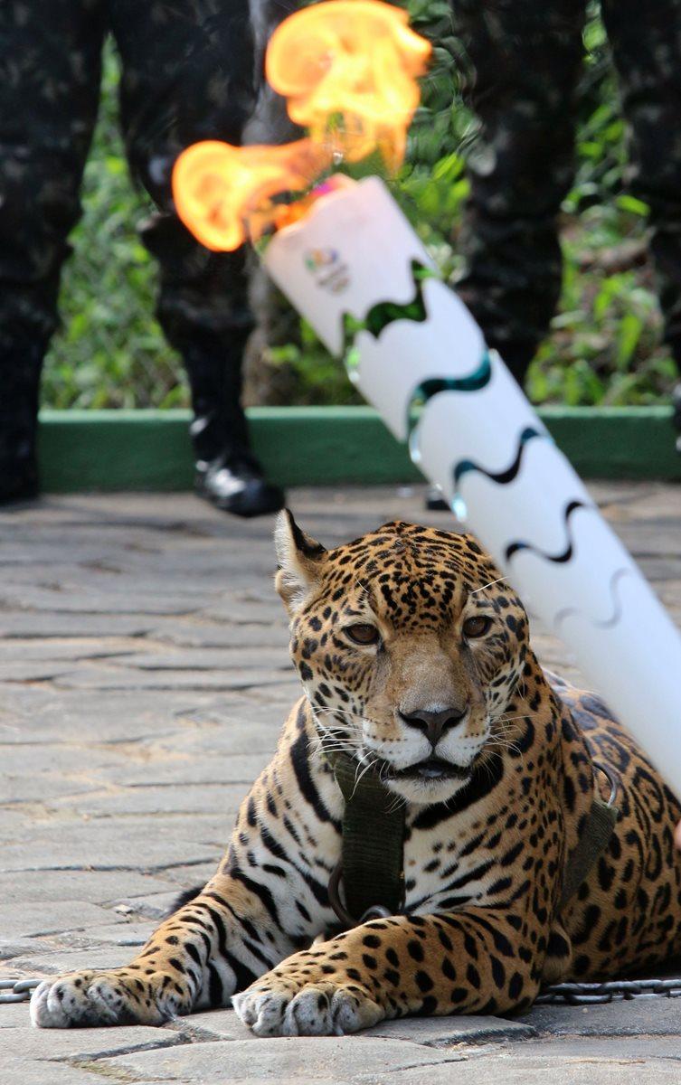 """Activistas expresan total repudio por la muerte del jaguar """"Juma"""", exhibido en un acto público."""